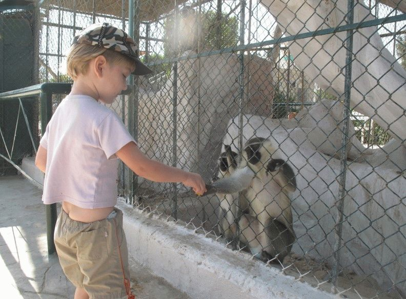 хургада зоопарк