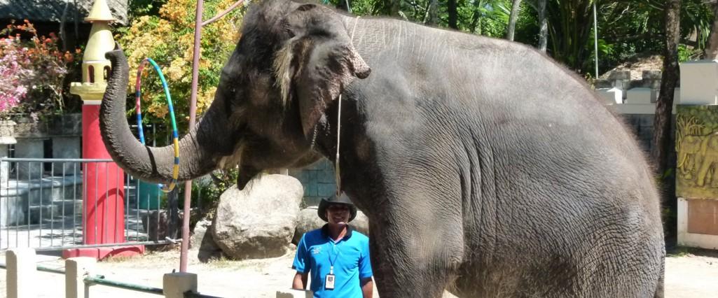 зооопарк на Пхукете - слони