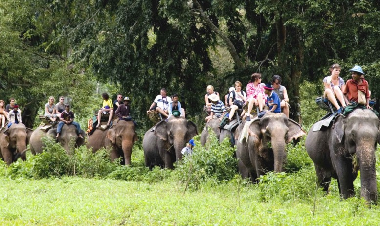 покататься на слонах в Тайланде