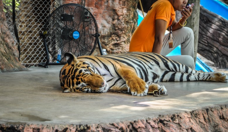 Тропический парк Нонг Нуч - зоопарк