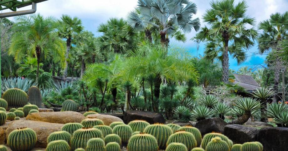 Паттайя Сад кактусов