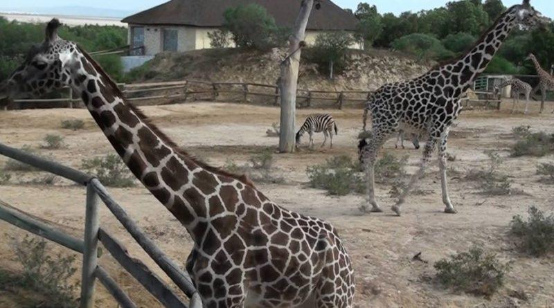 зоопарк в тунисе монастир