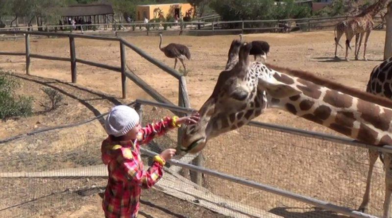 Зоопарк - Фригия