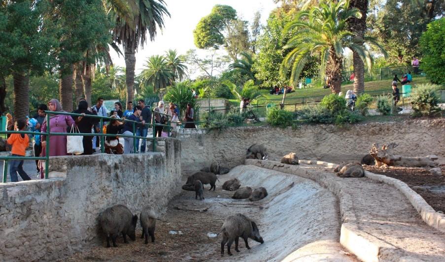 парк Бельведер - Тунис