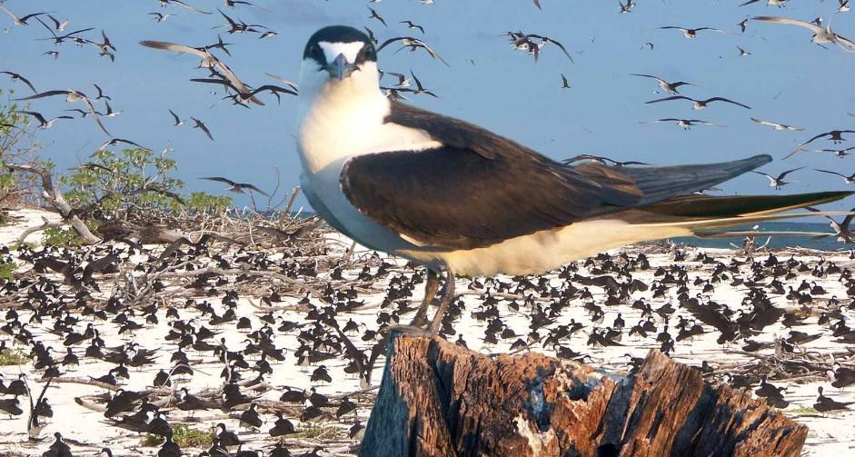 Птичий остров - Сейшелы