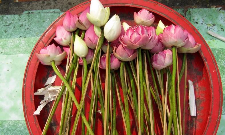 Цветы Таиланда - Лотос