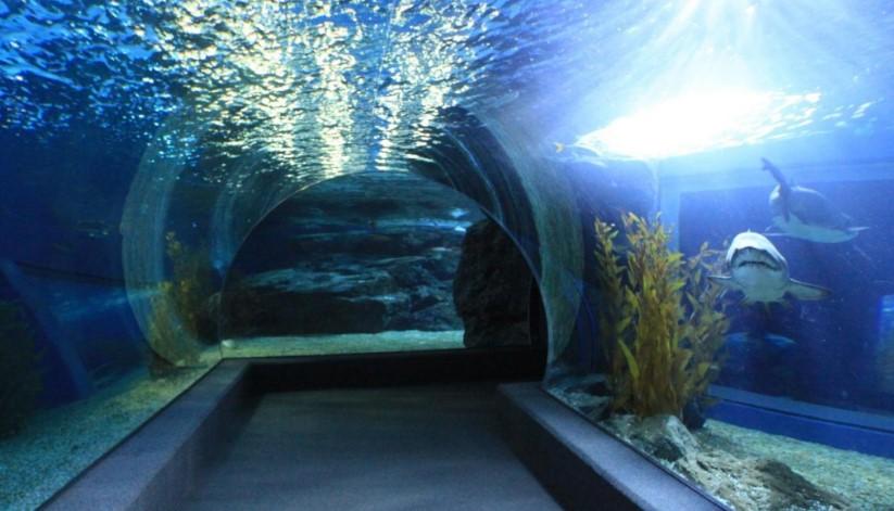 океанариум в Паттайе