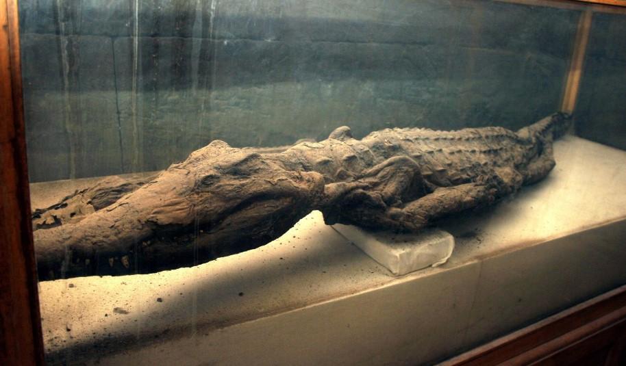 Крокодиловая ферма на Пхукете музей