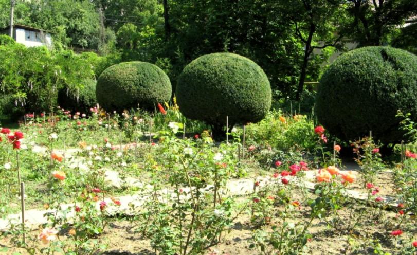 Ужгородский ботанический сад