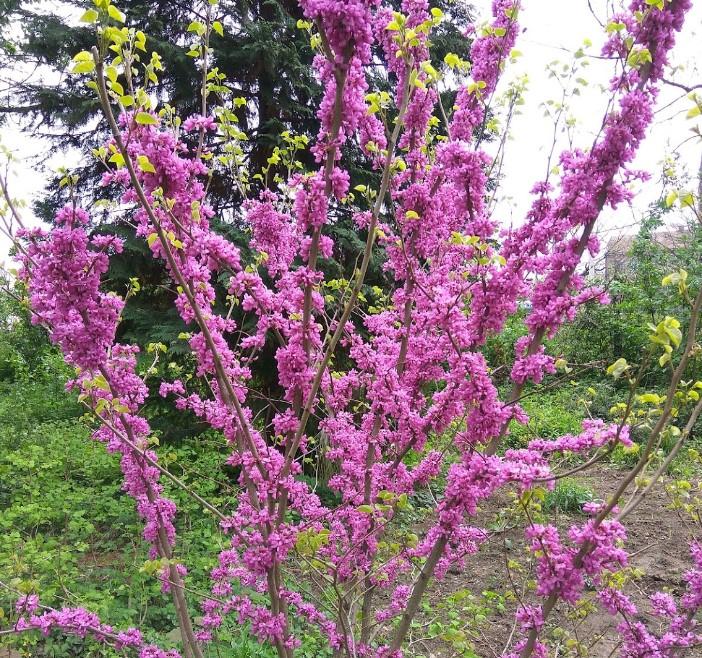 Ужгородский ботанический сад5