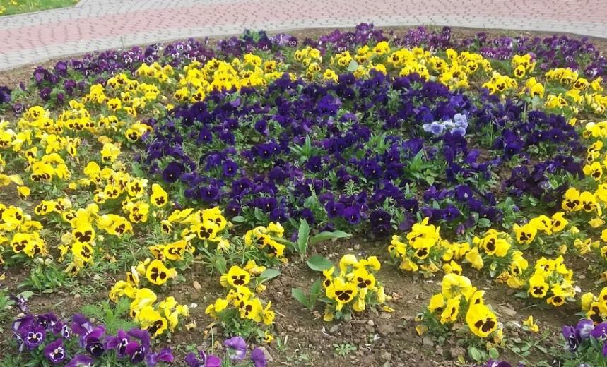 Ужгородский ботанический сад6