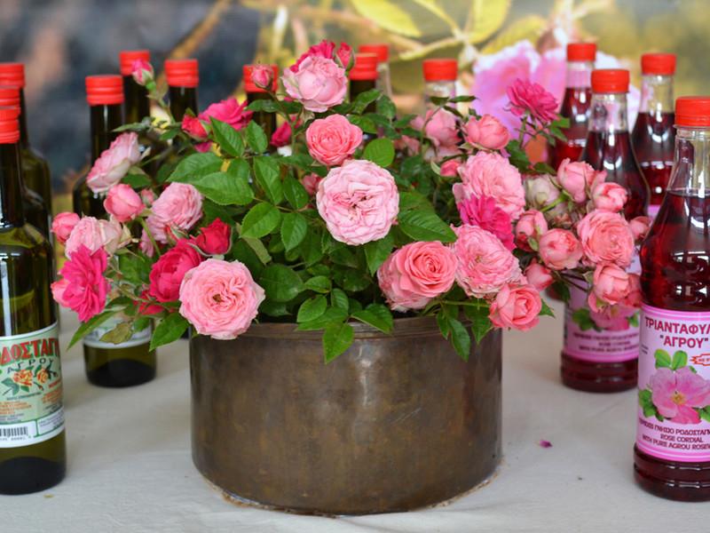 Розы деревни Агрос