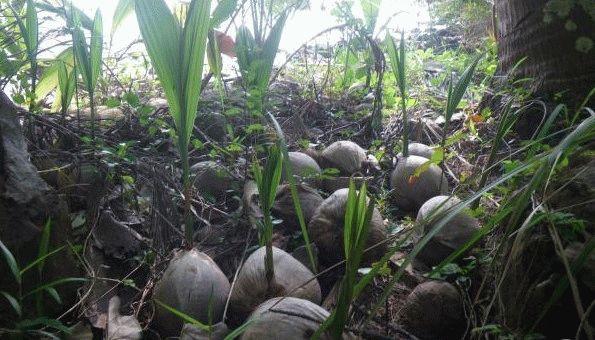 Лагуна кокосов Паттайа