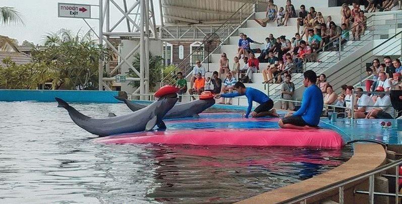 дельфины Паттайи