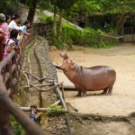 зоопарк «Кхао Кхео»