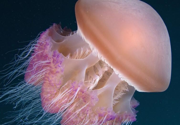 Медузы в Тунисе фото