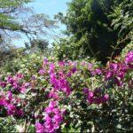 Сороа, сад орхидей