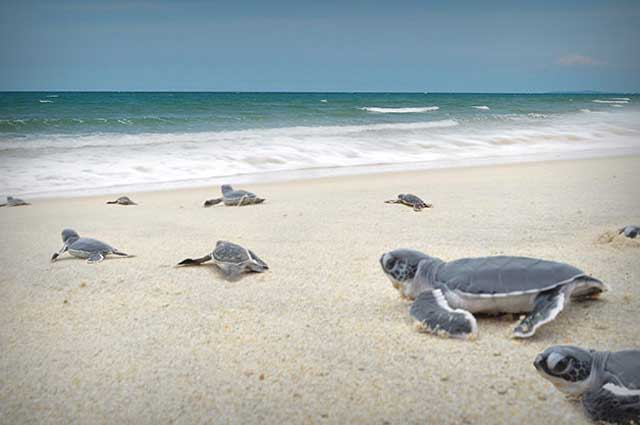 Черепаший пляж, Перхентианы