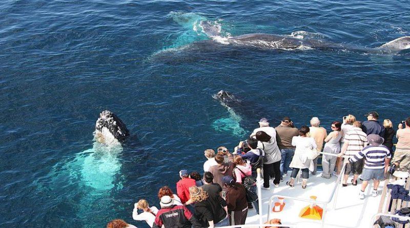 Сезон горбатых китов в Доминикане